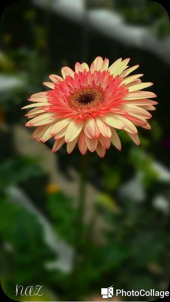 flower depth of field