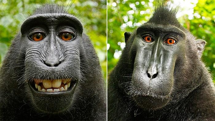 monkey-selfie02