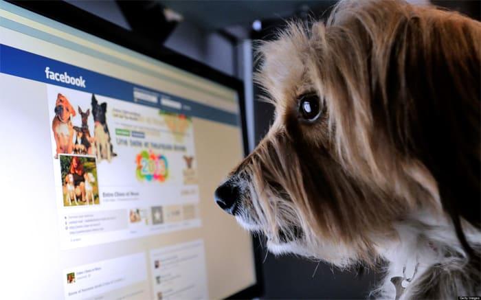 facebook-dog